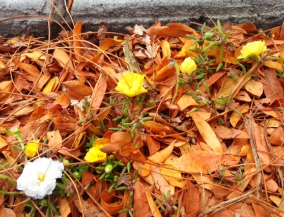 Troy-Flowers
